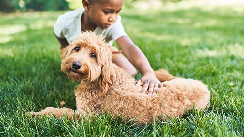 Photo of boy petting dog in the grass