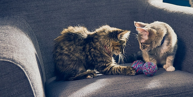 cats playing with knot ball