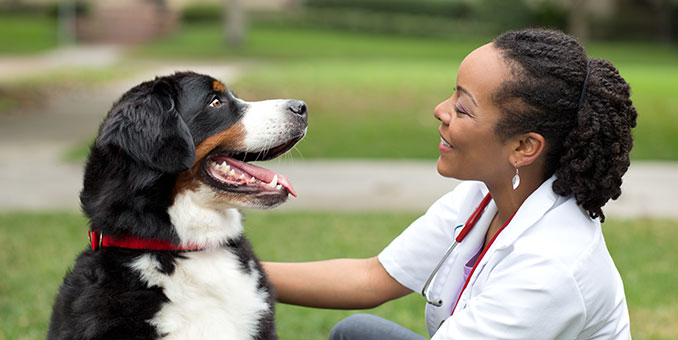 big dog with veterinarian