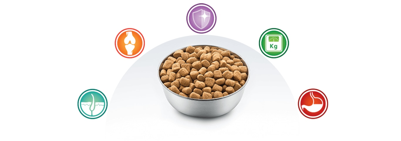 bowl with food for dogs and multibenefit nutrition