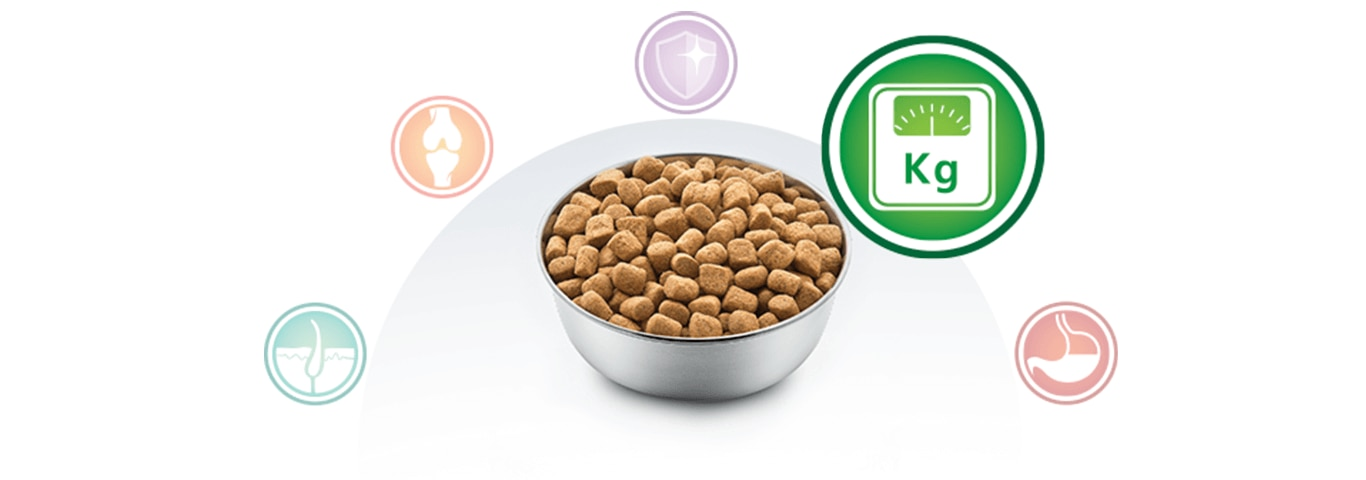 bowl with food for dogs and multibenefit nutrition kilograms